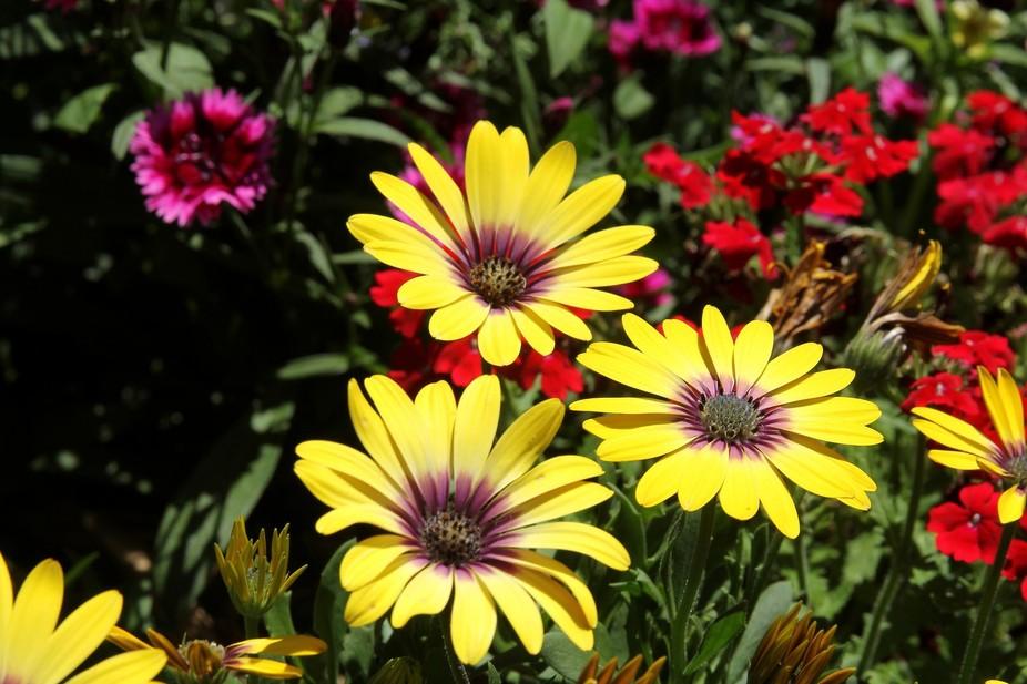 oct flowers0066