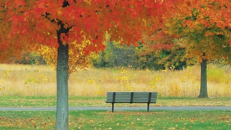 falltrees_bench_web