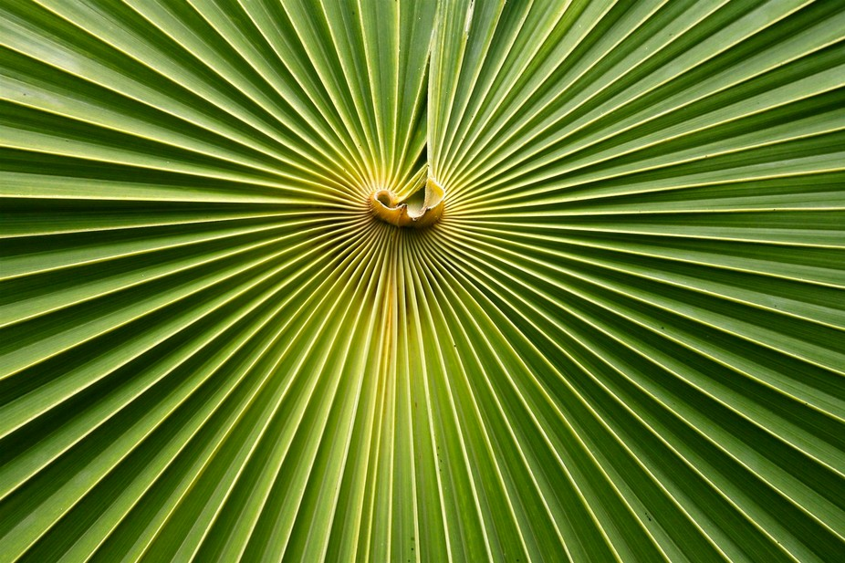 One of my favorite aspects of photography is finding unique ways to capture flora and fauna. Bein...