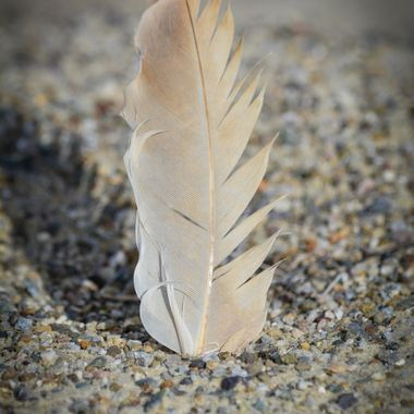 Went to Willcox, AZ to see the Sandhill Cranes, all I found was a feather in the sand.