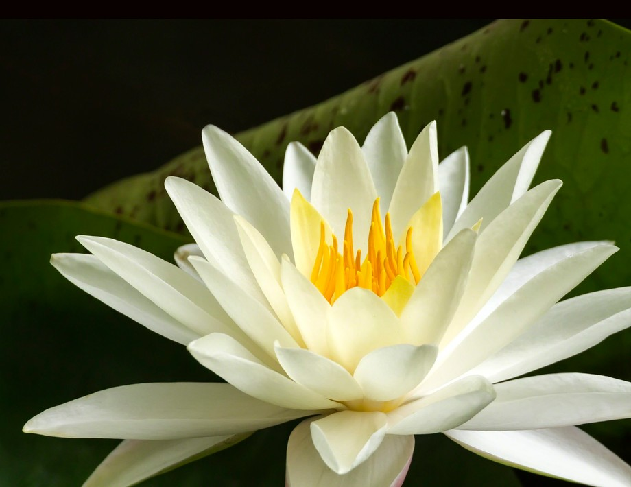 Taken in the lotus pond at The Huntington Botanical Gardens and Library, San Marino, CA