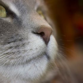 Our not so feral cat's nose is an elegant nose :)