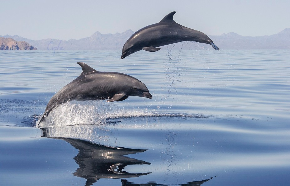While on the research boat in Mexico this pair of bottlenose dolphins took my heart!  Visit my we...