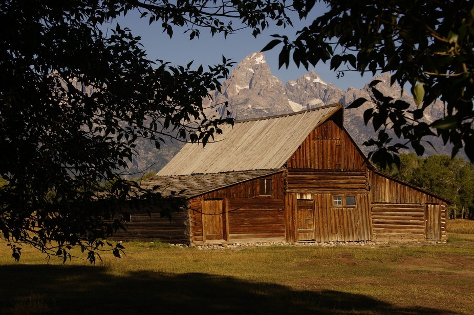 Framed by the branches of two different trees, the iconic barn stands before the majesty of the Grand Teton Mountains.