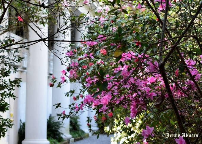Side Columns of Magnolia Plantation Main House with Azaleas