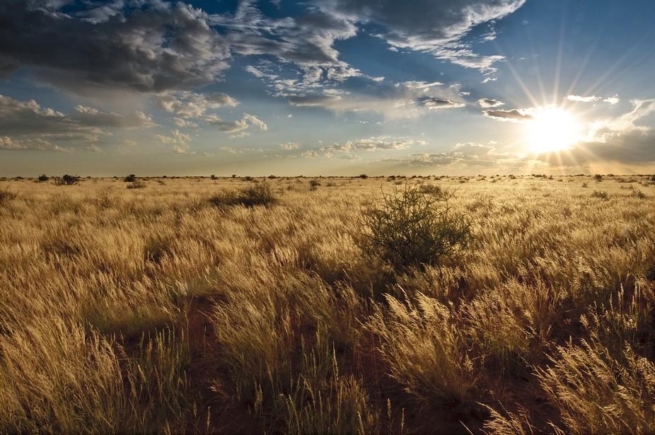 desert of Karoo