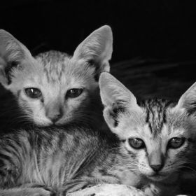 These two kittens looking curiously towards me while i am taking photo. They play together like a best friend and dont leave each other in whatev...