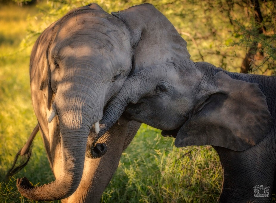 Little Elephant Secrets