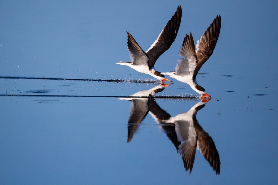 synchronous skimmers