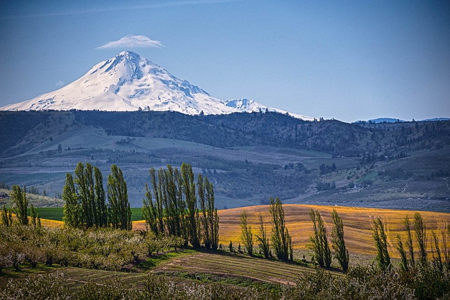 Eastern Oregon Landscape from orchards to grain fields to mountain