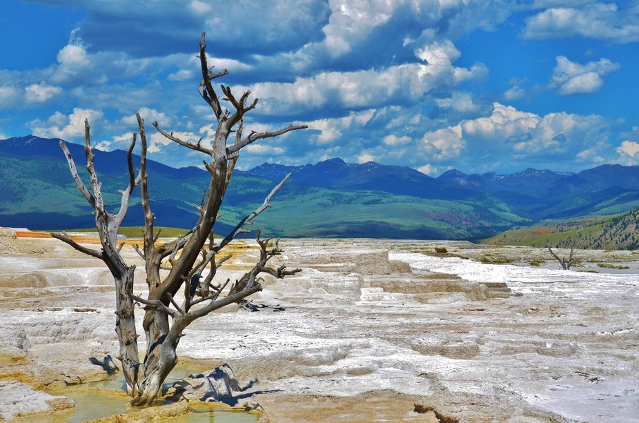 Taken at Yellowstone. Different areas of the park have markedly varied landscapes... Beautiful an...
