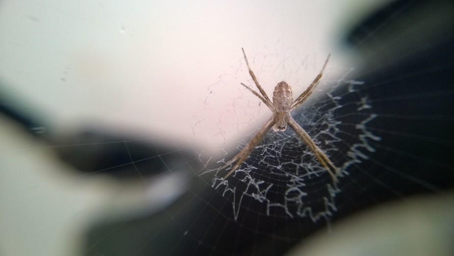 Spider on Mountain Bike.