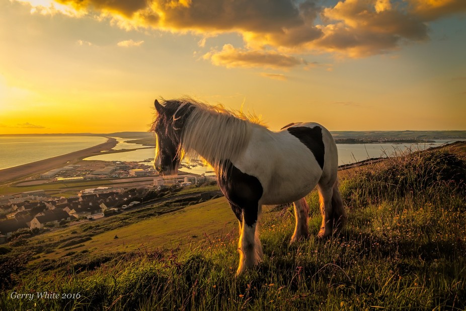 Horse with a view....