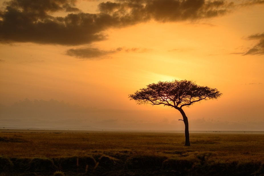 My safari trip to Kenyan was life changing. The mornings when the sun rose, the sky turned a gold...