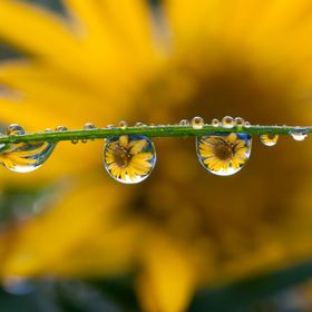 another dewdrop reflection