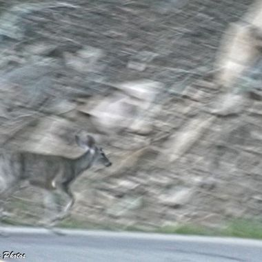 Young buck running up the hill