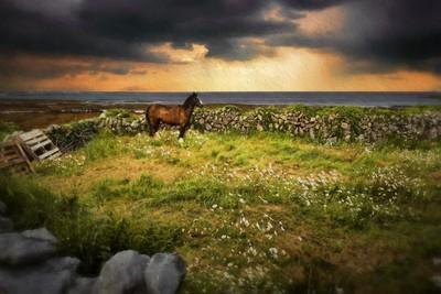 Horse on Inis Mor