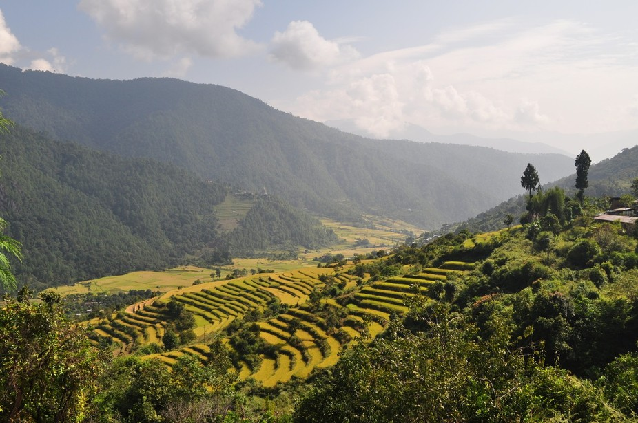 The paddy fields of Bhutan