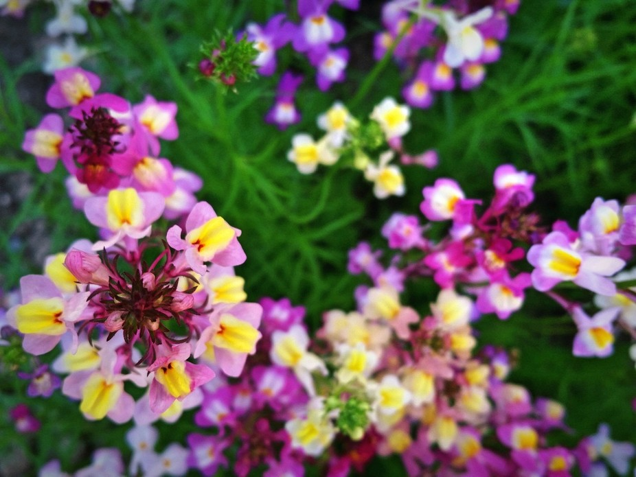 Colorful spring flowers in the garden. .