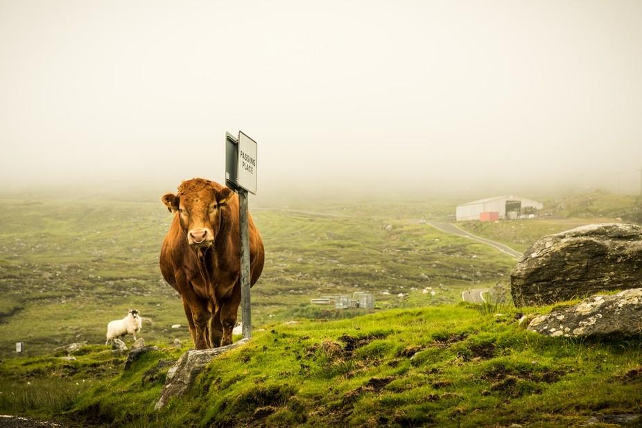 Taken on the stunning Isle of Harris, Scotland
