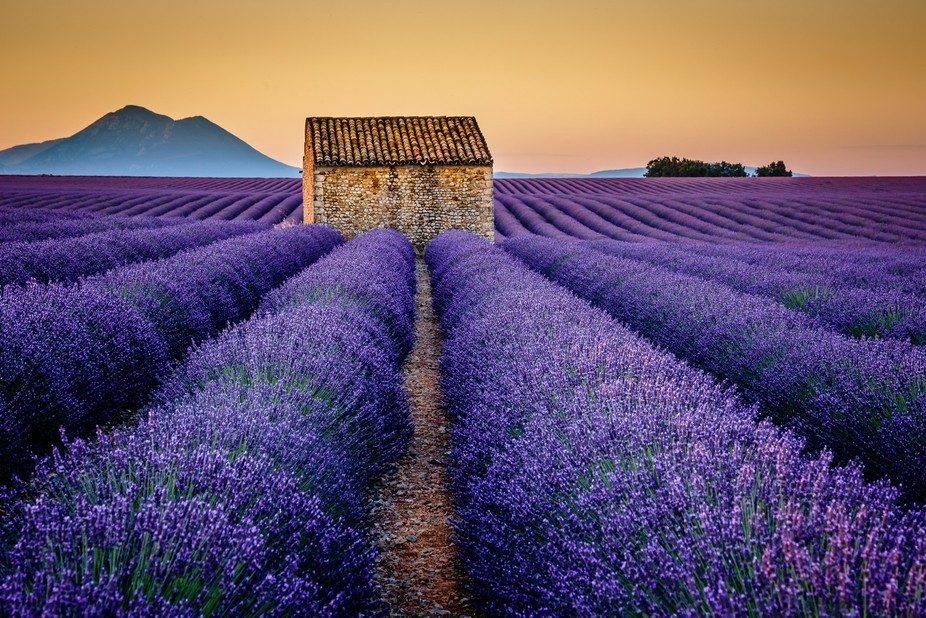 Just before sunrise, I walked through the lavender field in Valensole in Provence. With the smell...