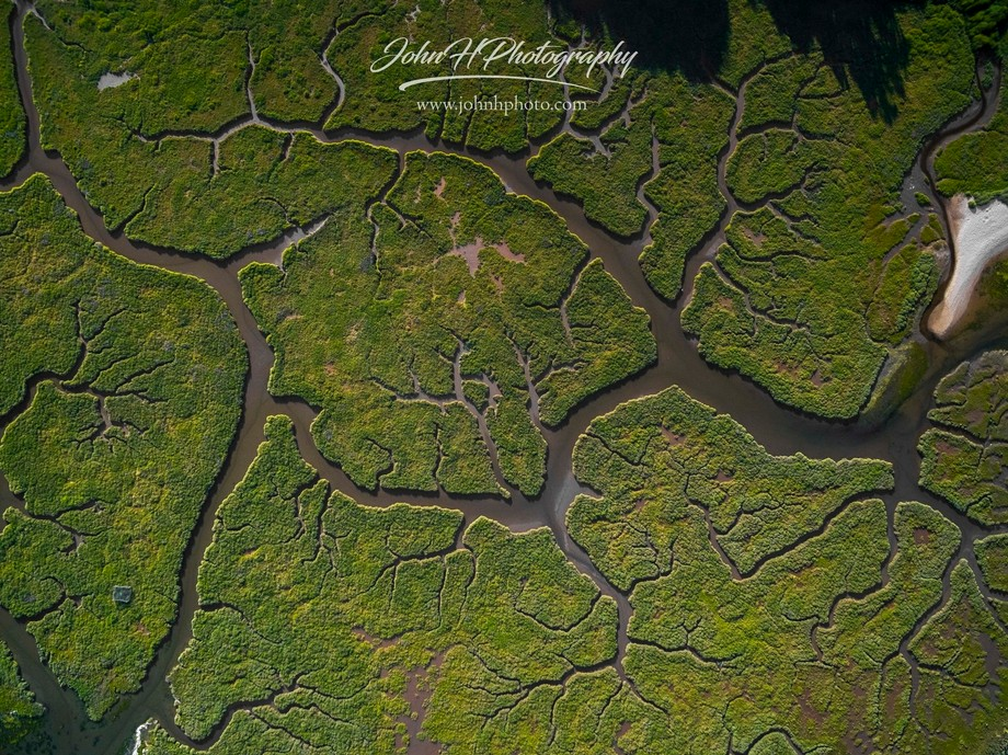 Shot at Arne, Dorset UK, this photograph shows the vein like structures caused by the water. Shot...