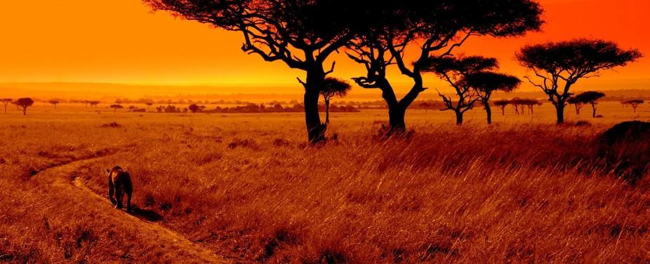 Lion at Sunset in Kenya, Africa