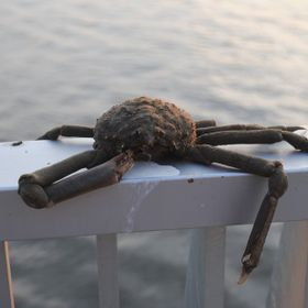 A dead crab that was slumped on the railing of the pier, birds scattered around it. Practically gifted wrapped by nature to be feasted upon. My P...