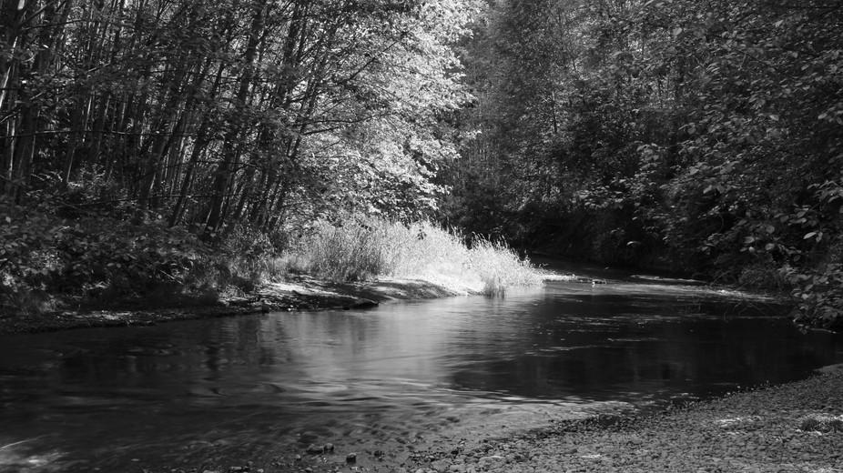 Issaquah Wa. creek