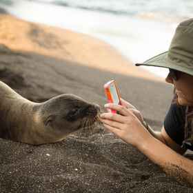 Taken in the Galapagos where wildlife and humans truly do co-exist to the fullest extent.