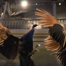 I recently visited The National Museum of Scotland with my older sister, these photos are a result of that trip and focus on what captured my int...