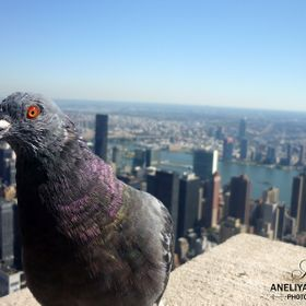 I was on my adventure in New York when I took this picture! The view from the top of the Empire State Building was impressive it's amazing t...