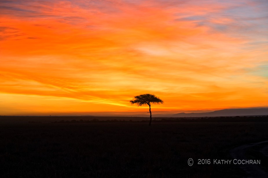Sun rising behind an isolated acacia tree in Samburu, Kenya using Nikon D4s with 80/400 mm lens