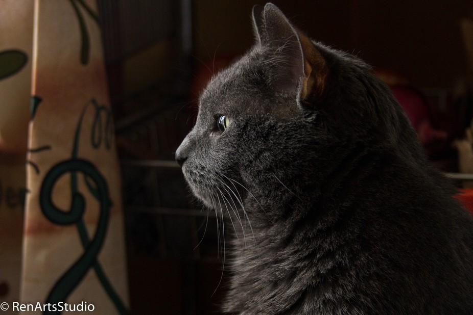 At the time , we had three cats in the house. There were spots they could watch outside all over ...