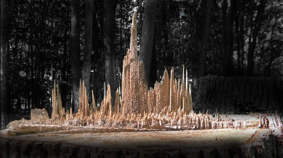 A city skyline left behind naturally by a felled tree.