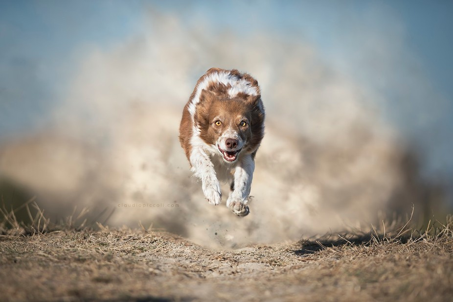 A border collie is like a desert storm :)