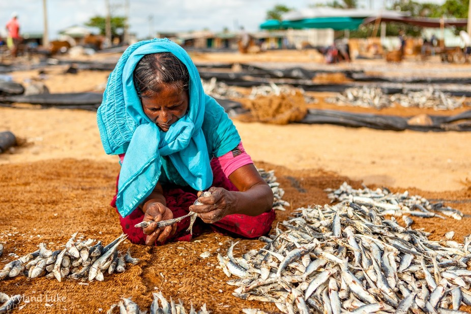 I finally made it to the Negombo Fish Market, a beautiful landmark in a very different way. Sri L...