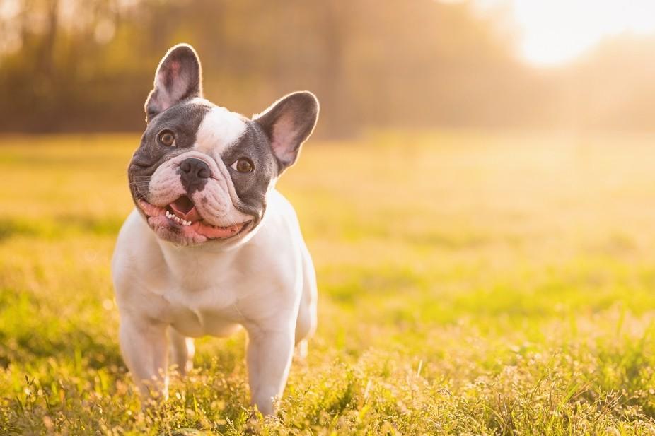 Always A Happy Dog!