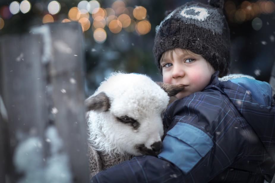 Adam and the lamb