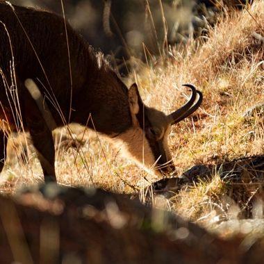 Wildlife Closeups