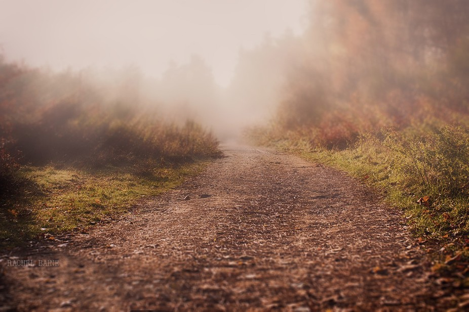 I took my kids to school then my camera and I had a walking date in the woods near my house, it w...