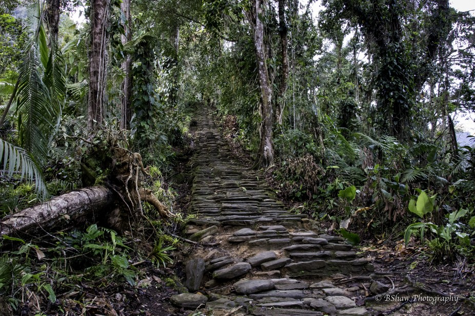 And then the last massive stone staircase taking you up to the top levels at Ciudad Perdida, Colo...