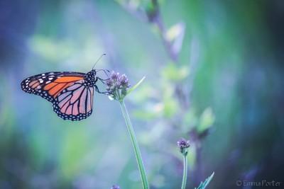 Butterfly_04_02