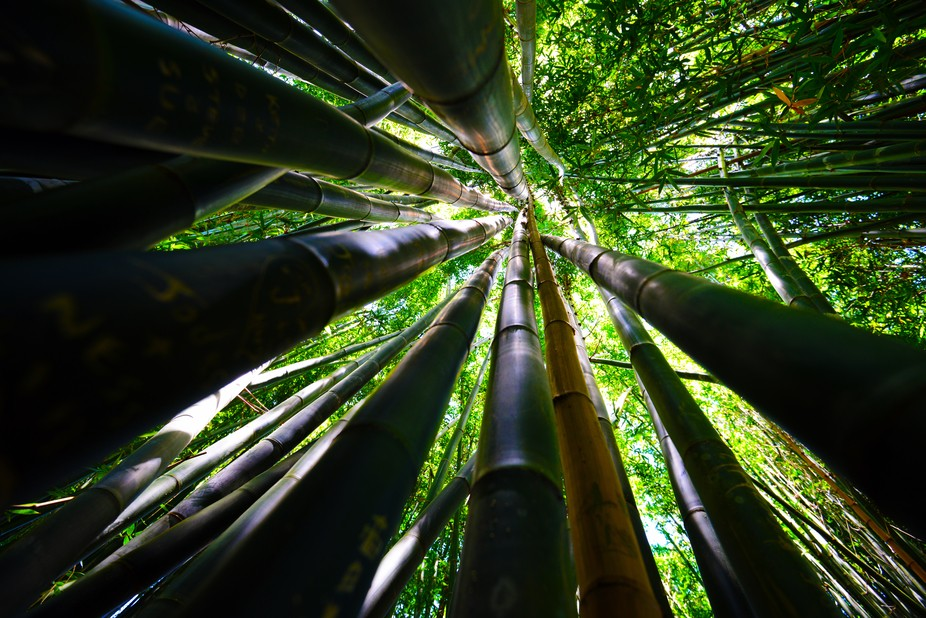 Bamboo Forest - © sandro rossi