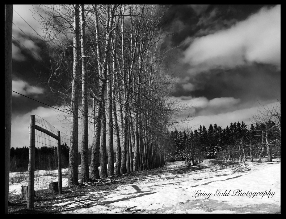 I stopped to shoot these trees with the storm clouds behind them ! It's as if they were ...