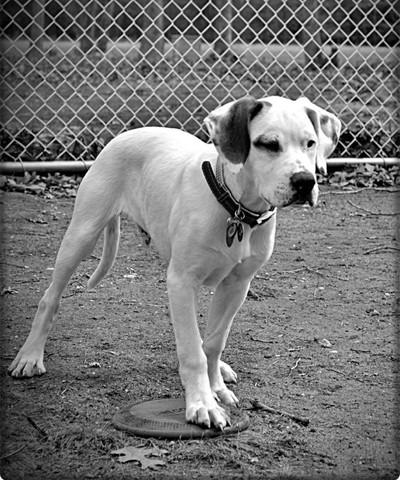 Calvin's Dog Days