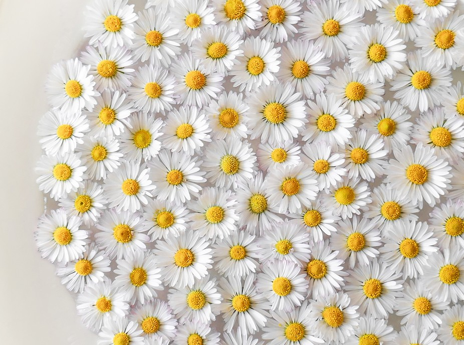 floating daisies