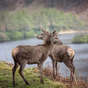 Shot in Glen Etive, Scotland. Unbelievable how much deer there is to spot in Scotland!