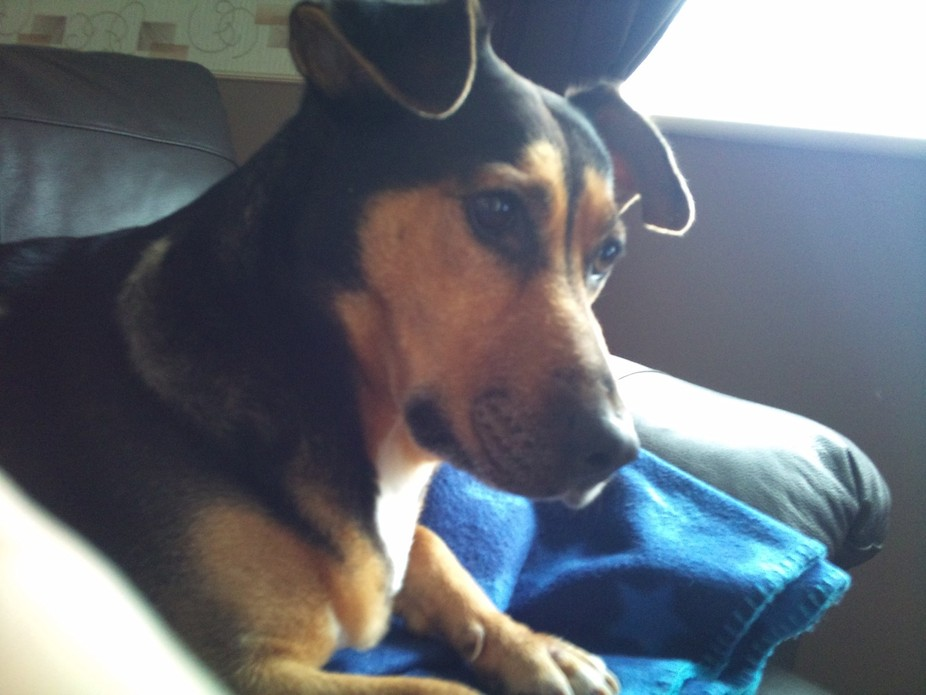 My much-loved and missed dog