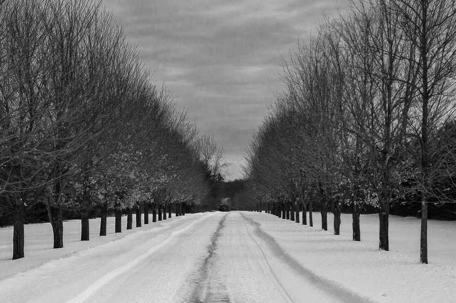 Black and White photo of a winter day in Ottawa, Canada